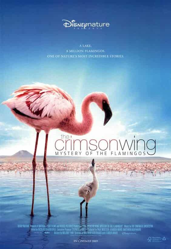 The Crimson Wing 2009 Movies Watch on Disney + HotStar